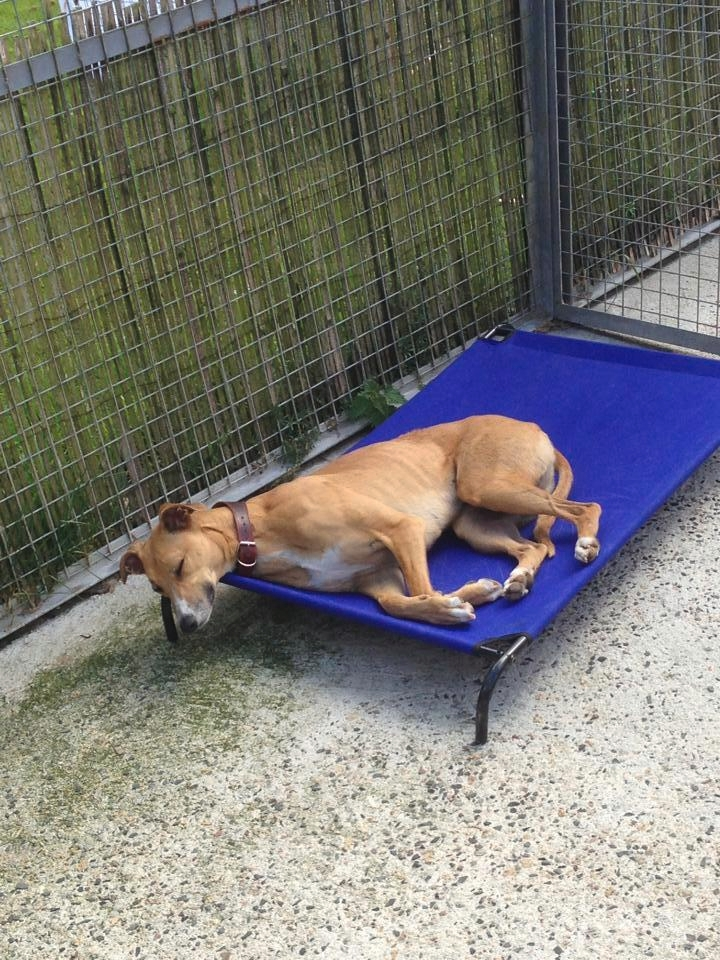 briggan farm boarding kennels amp cattery   kennels for dogs cats and