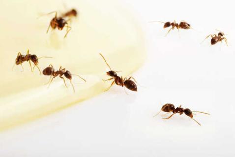 Precision Pest Inspections
