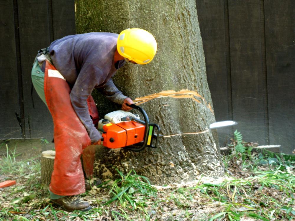 Zazueta Tree Specialists