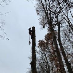 Schaeffers Tree Service image 2