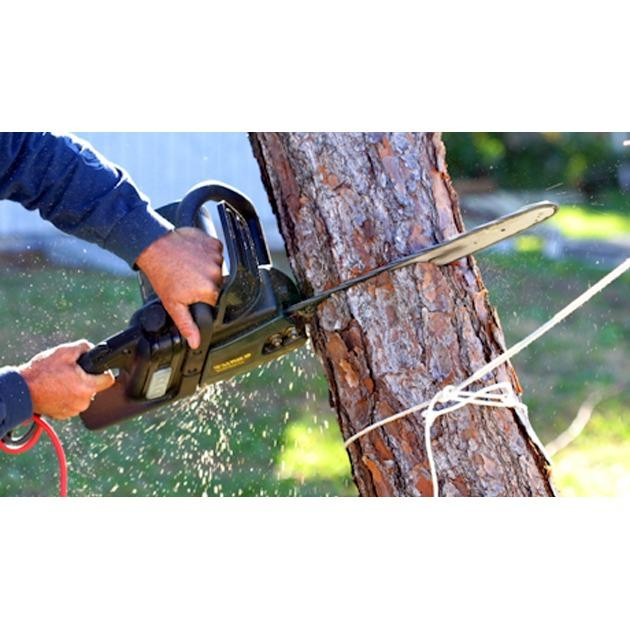 Action Tree Service