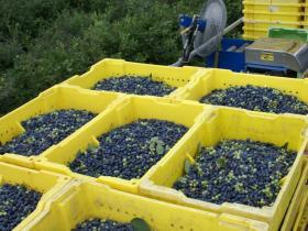 Leduc Blueberries image 5