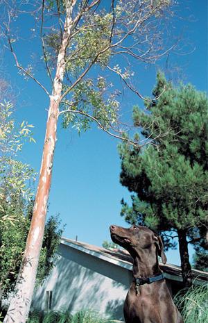 D. Follett Tree Service & Landscaping image 0