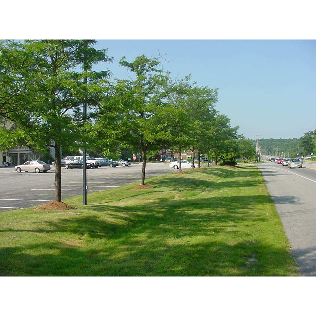 J.J.S. Lawn & Tree Services