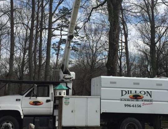 Dillon Tree Service image 1