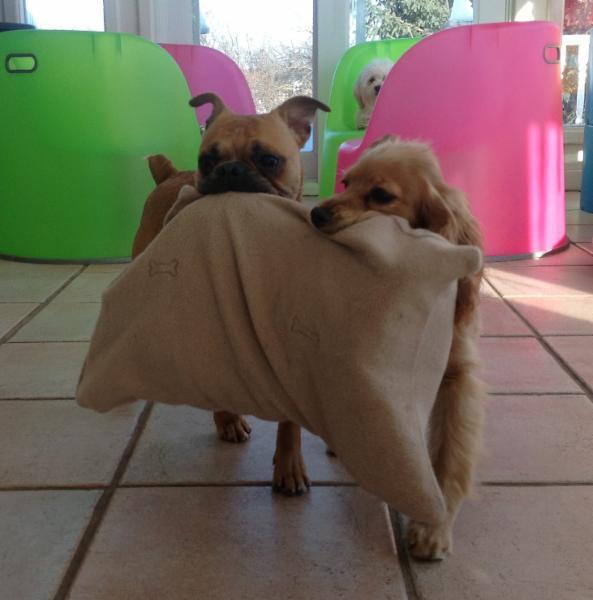 Little Dog House Ajax On Ourbis