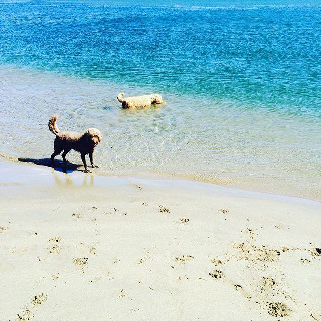 Fetch! Pet Care image 28