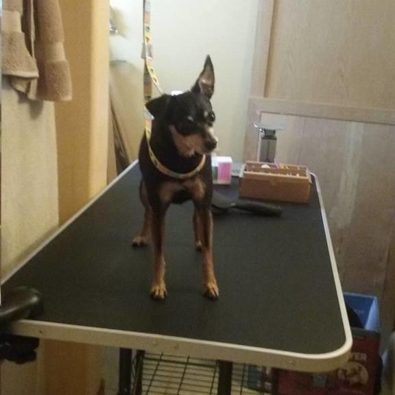 Canine Grooming Services image 1
