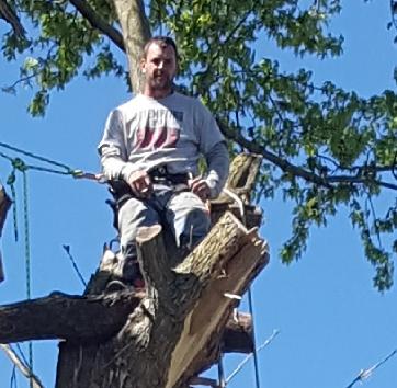 Coffman's Tree Service image 41