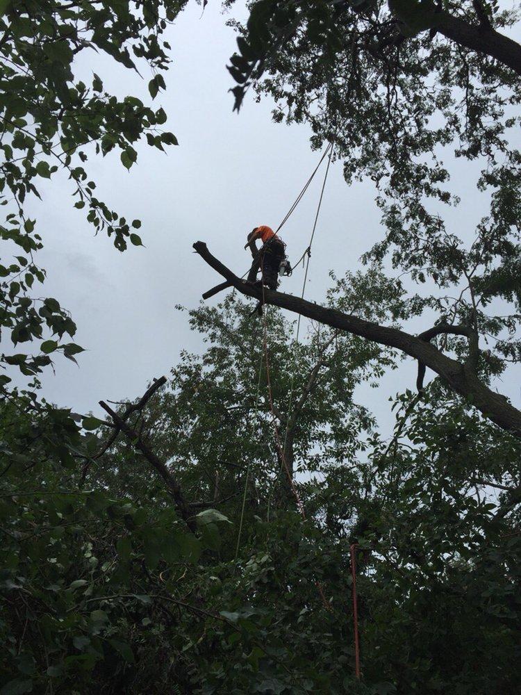 Richter's Tree Service LLC image 3