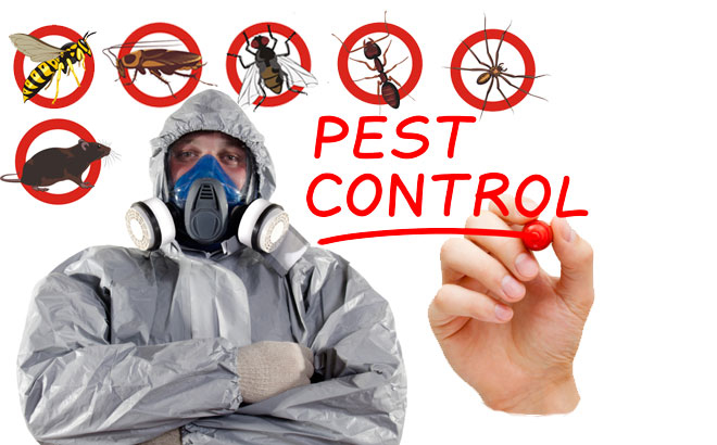 Beebes Pest Termite & Bee Service image 2