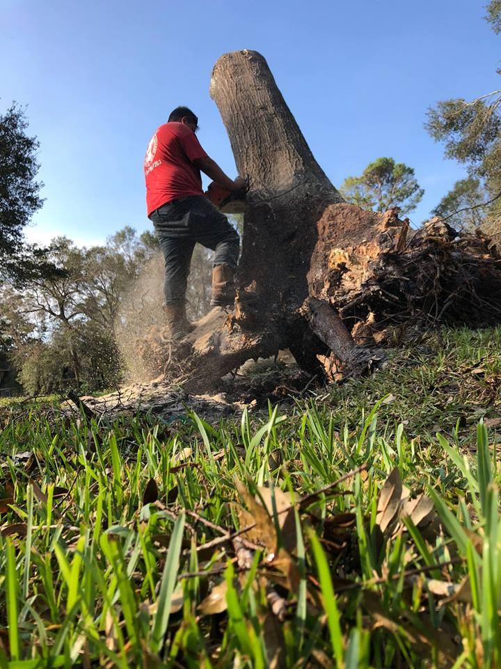 Bark Buster Tree Service image 3