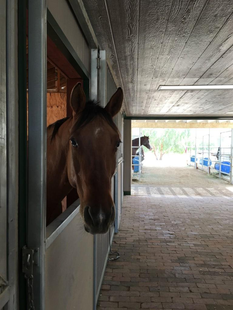 Lapeyre Ranch - Horse Boarding Facility image 4