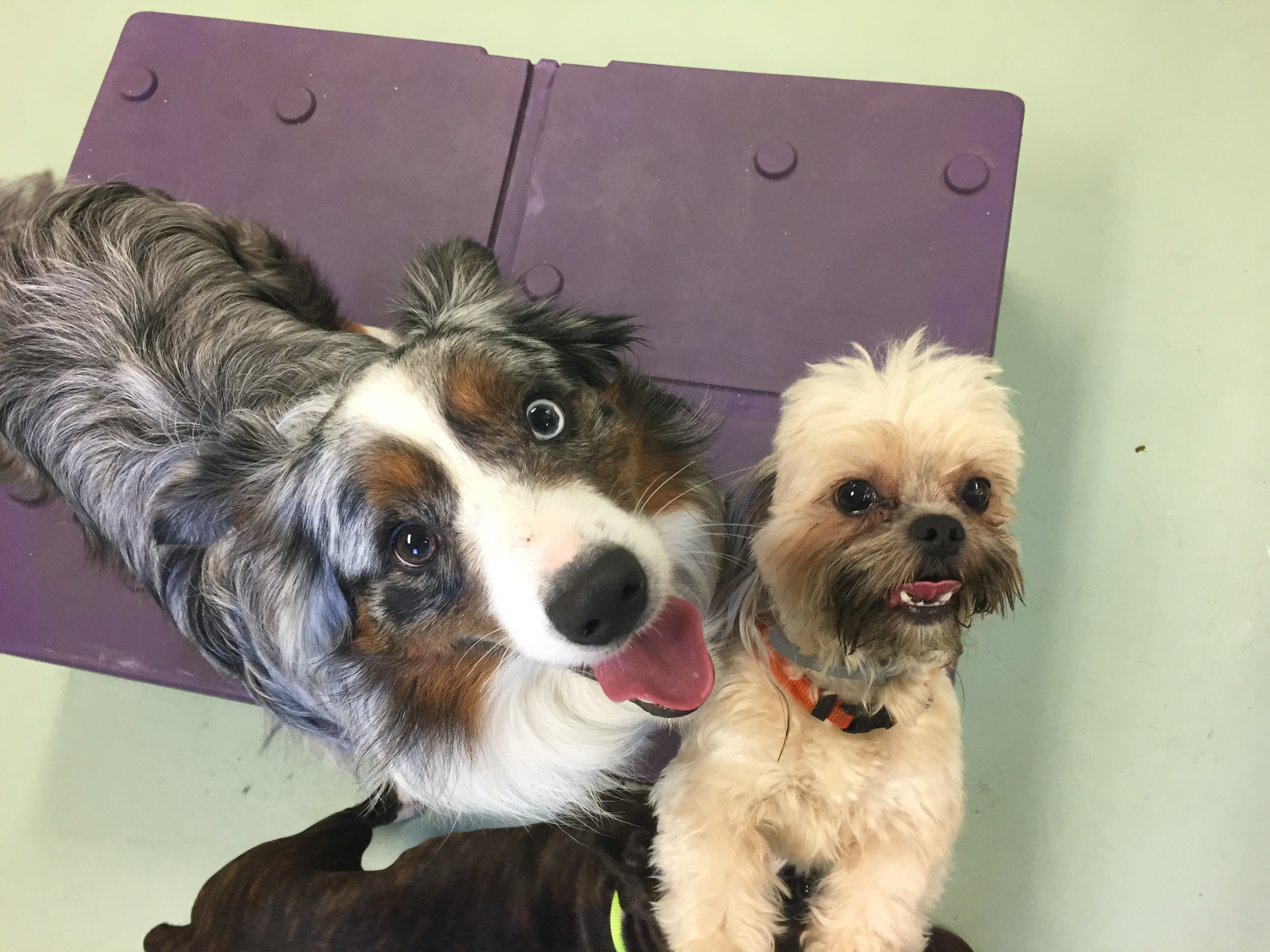 Jagger's Doggie Daycare, Dog Grooming, Training & Boarding image 13