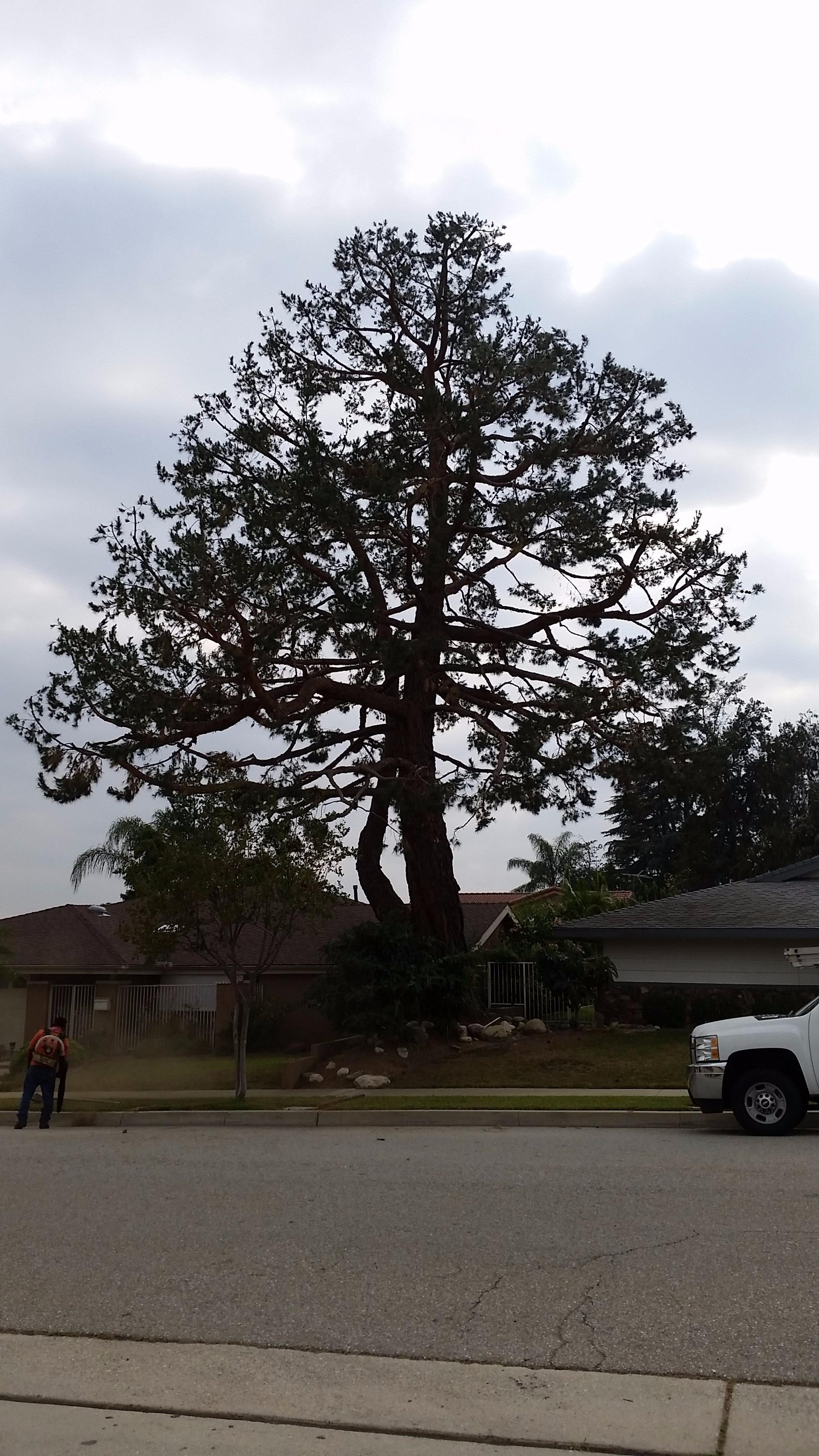 A & J Tree Service image 1