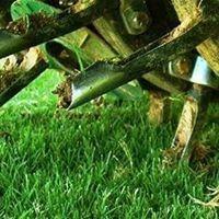 Ivan & Son Lawn Care image 21