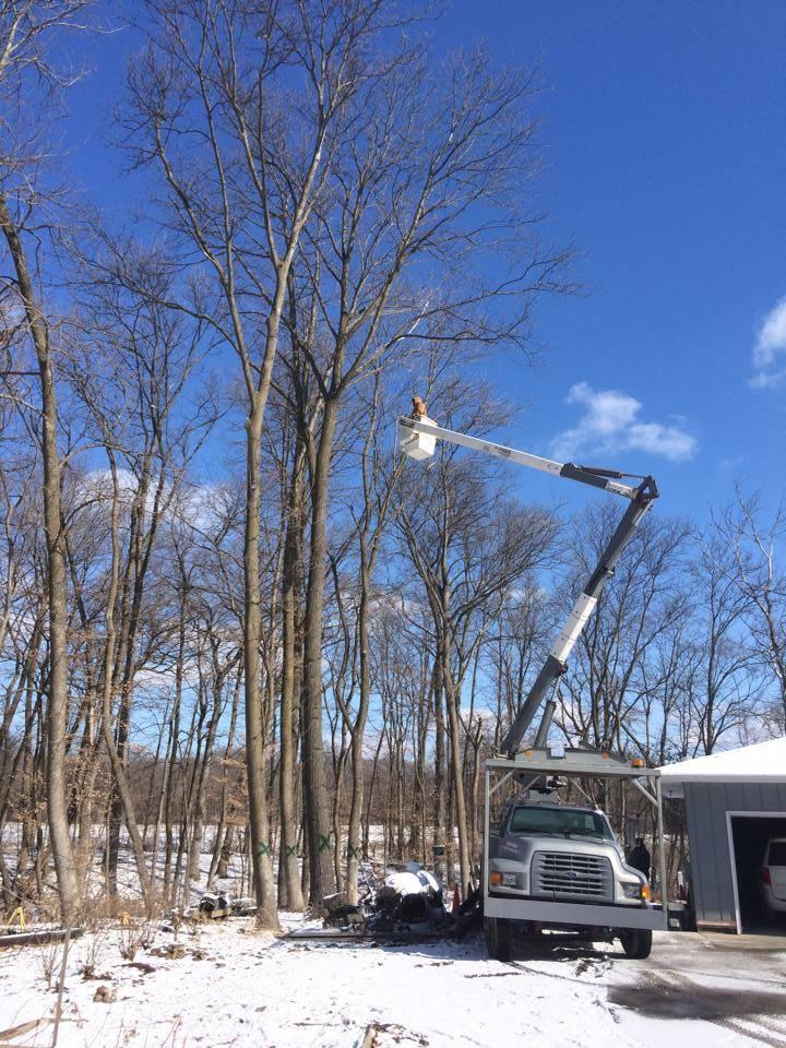Freers & Sons Tree Service image 3