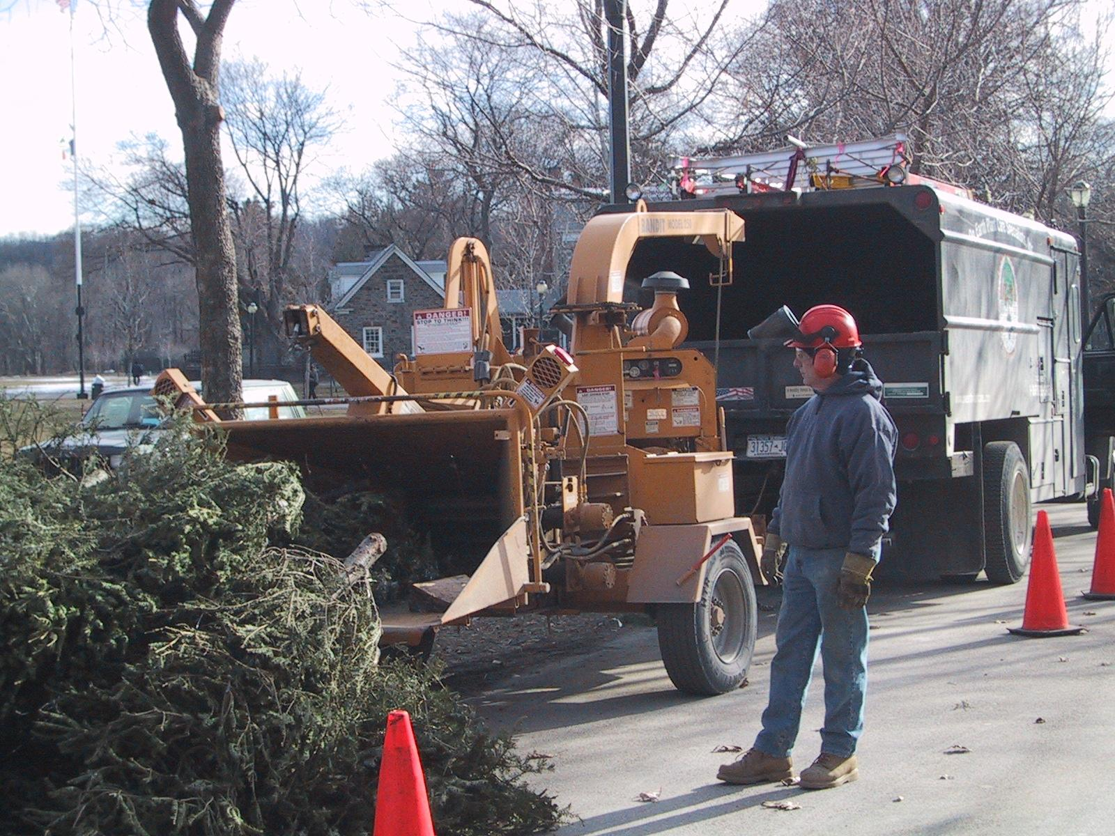 Christmas trees are being chipped up after the holidays as a community service.