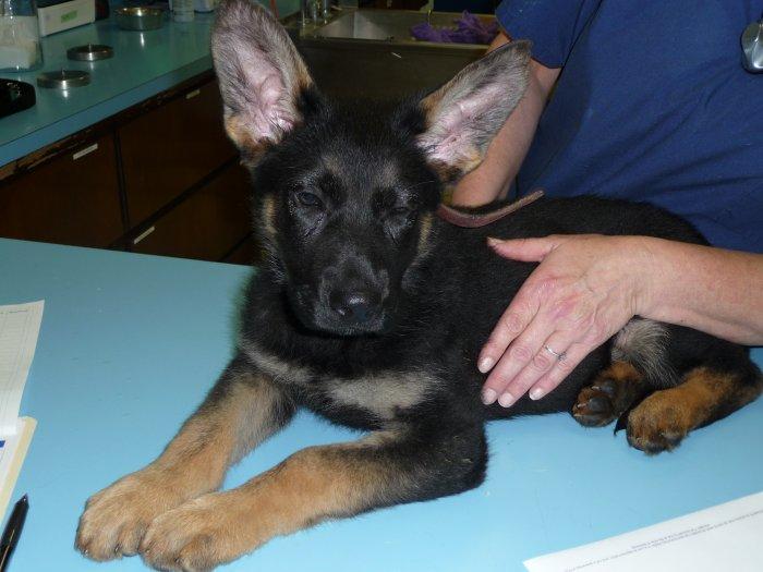 Animal Allergy Specialists California
