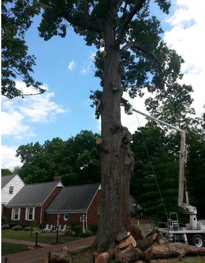 Hughes Tree Service image 4