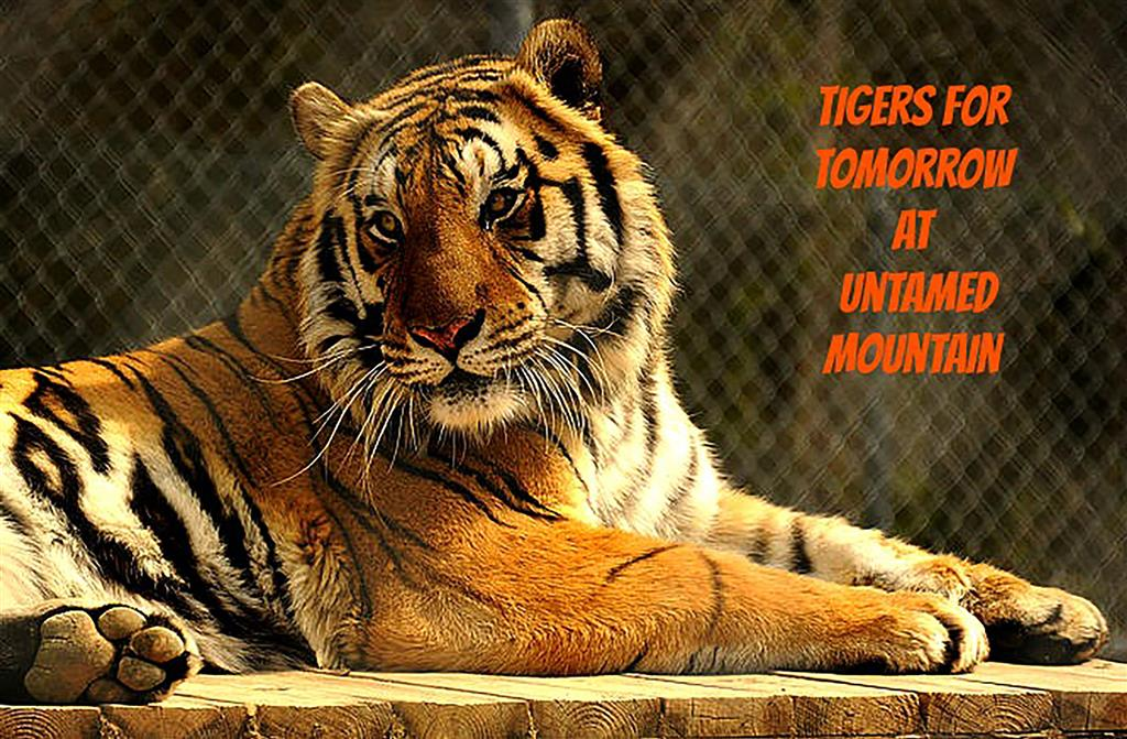 Tigers for Tomorrow