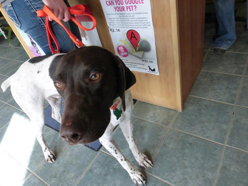 Powell Veterinary Service image 6
