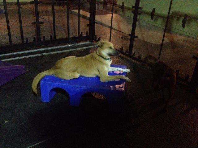 Rover kennels in santa monica ca 90405 citysearch for Dog boarding santa monica