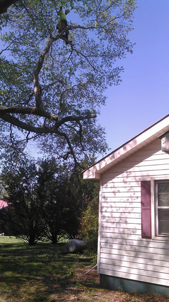 Bark and Bight Professional Tree Contractors