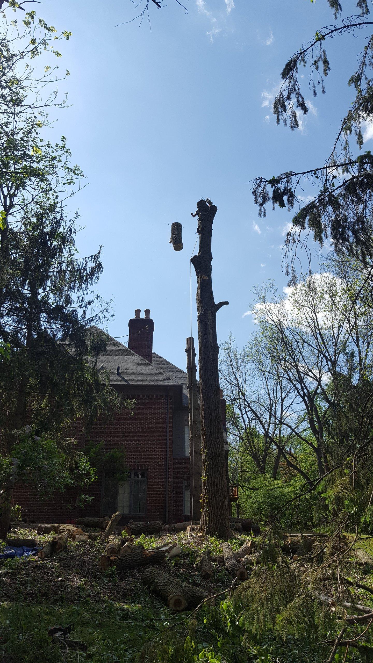 Coffman's Tree Service image 20