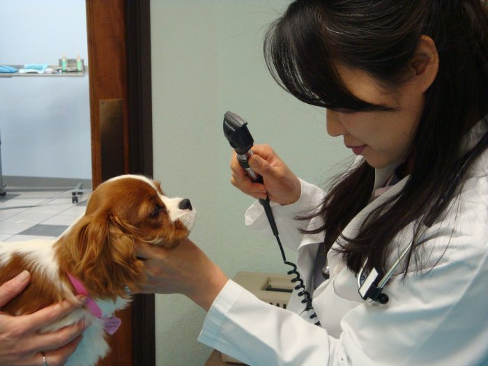 VCA Preston Park Animal Hospital image 6