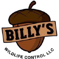 Billy's Wildlife Control