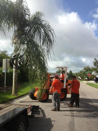 We also offer palm tree removal in the Sarasota area.