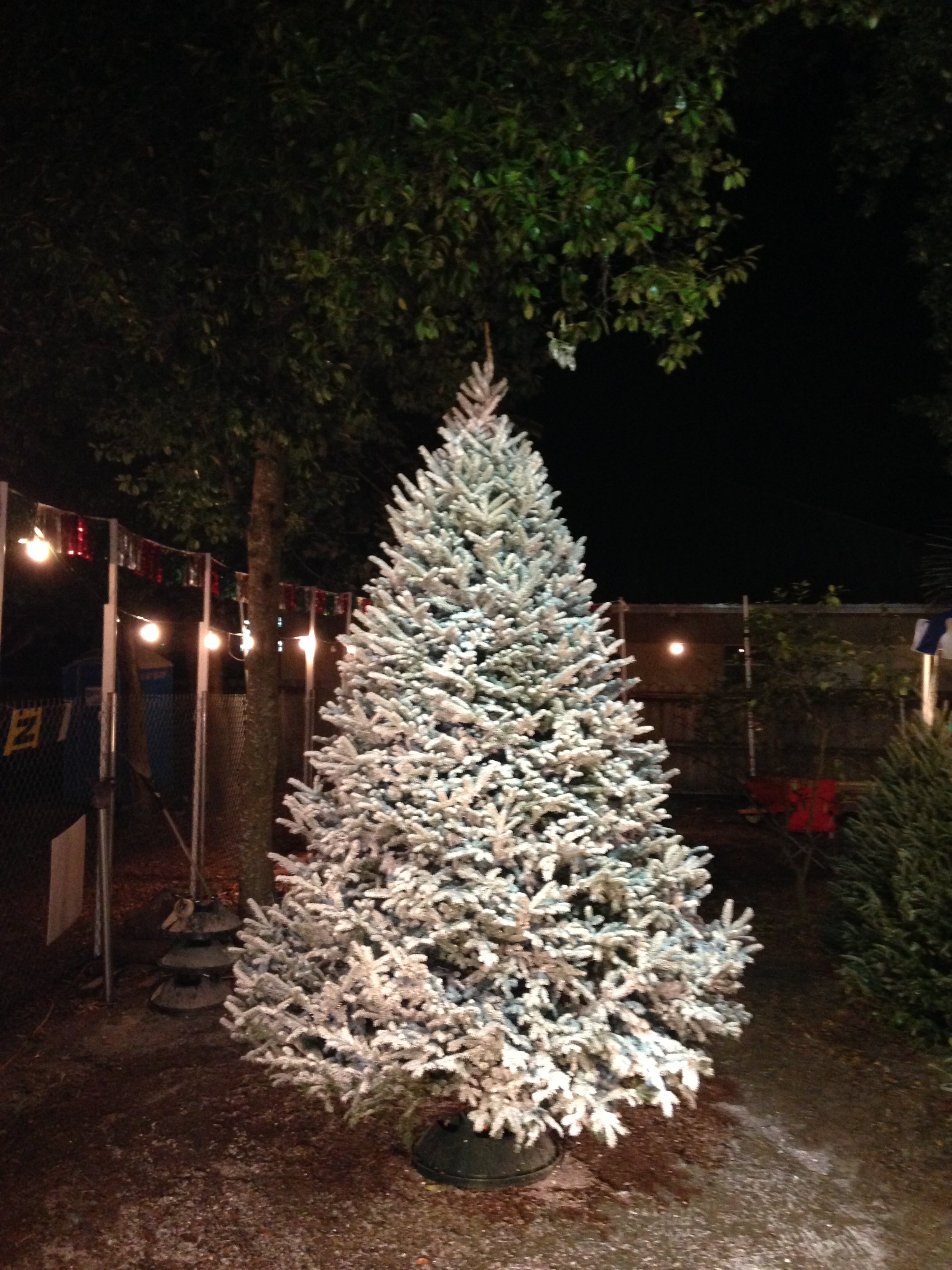 Dave's Christmas Tree Lot image 89