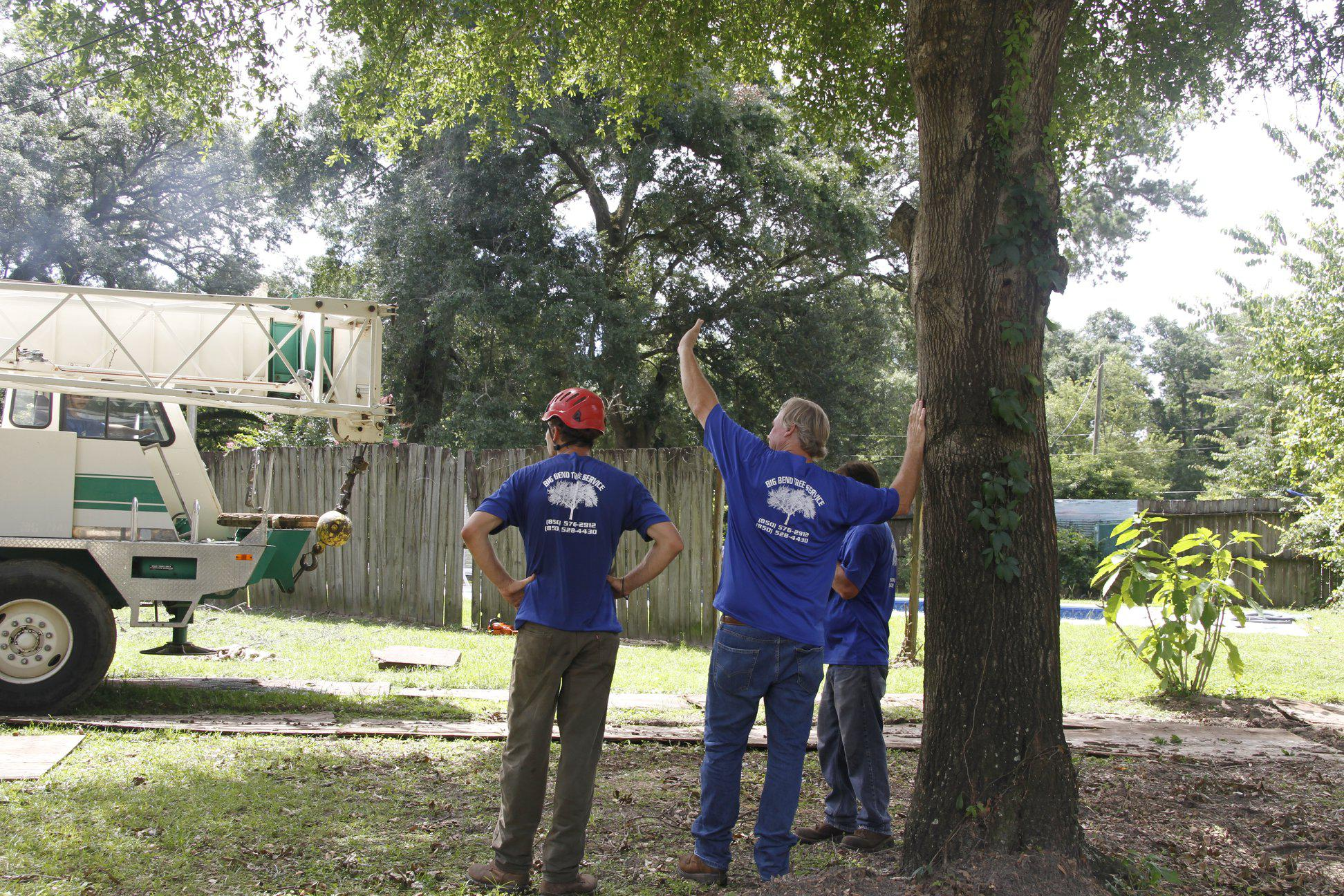 Big Bend Tree Service image 1