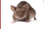 Sligo Pest Control