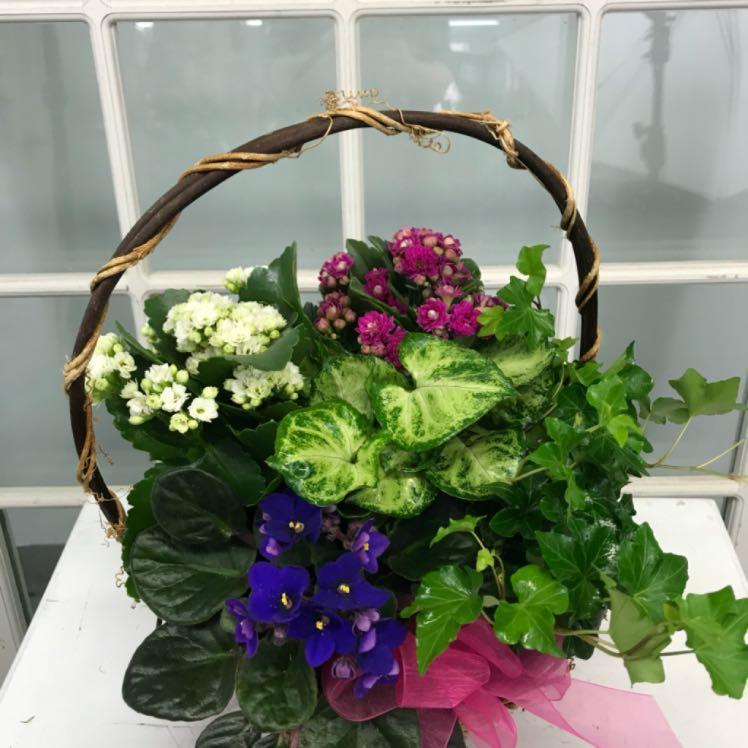 Floral Elegance image 10
