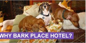 Bark Place Hotel & Pet Grooming image 1