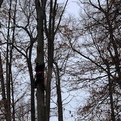 Schaeffers Tree Service image 1