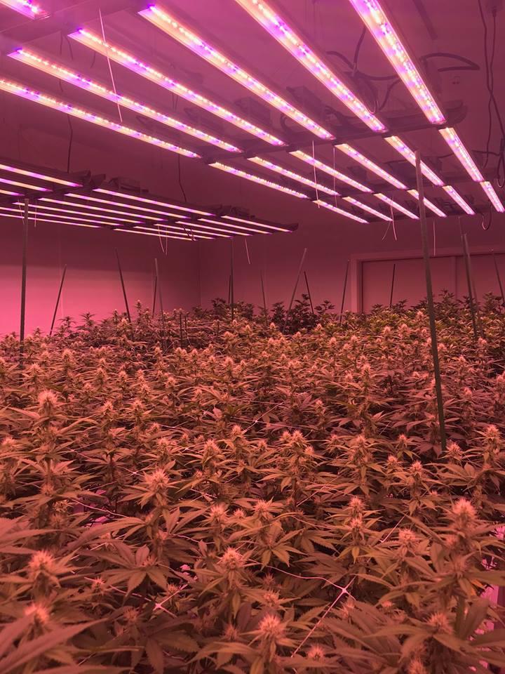 GrowRay image 1