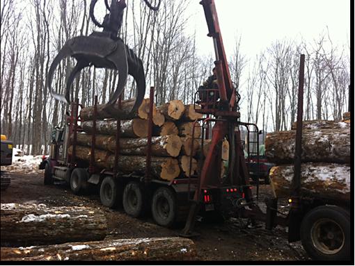 Larry Miscio Logging & Firewood Sales - Eagle Lake, ON K0M 1M0 - (705)754-3762 | ShowMeLocal.com