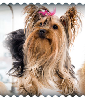 Mcclain's mobile dog grooming image 0