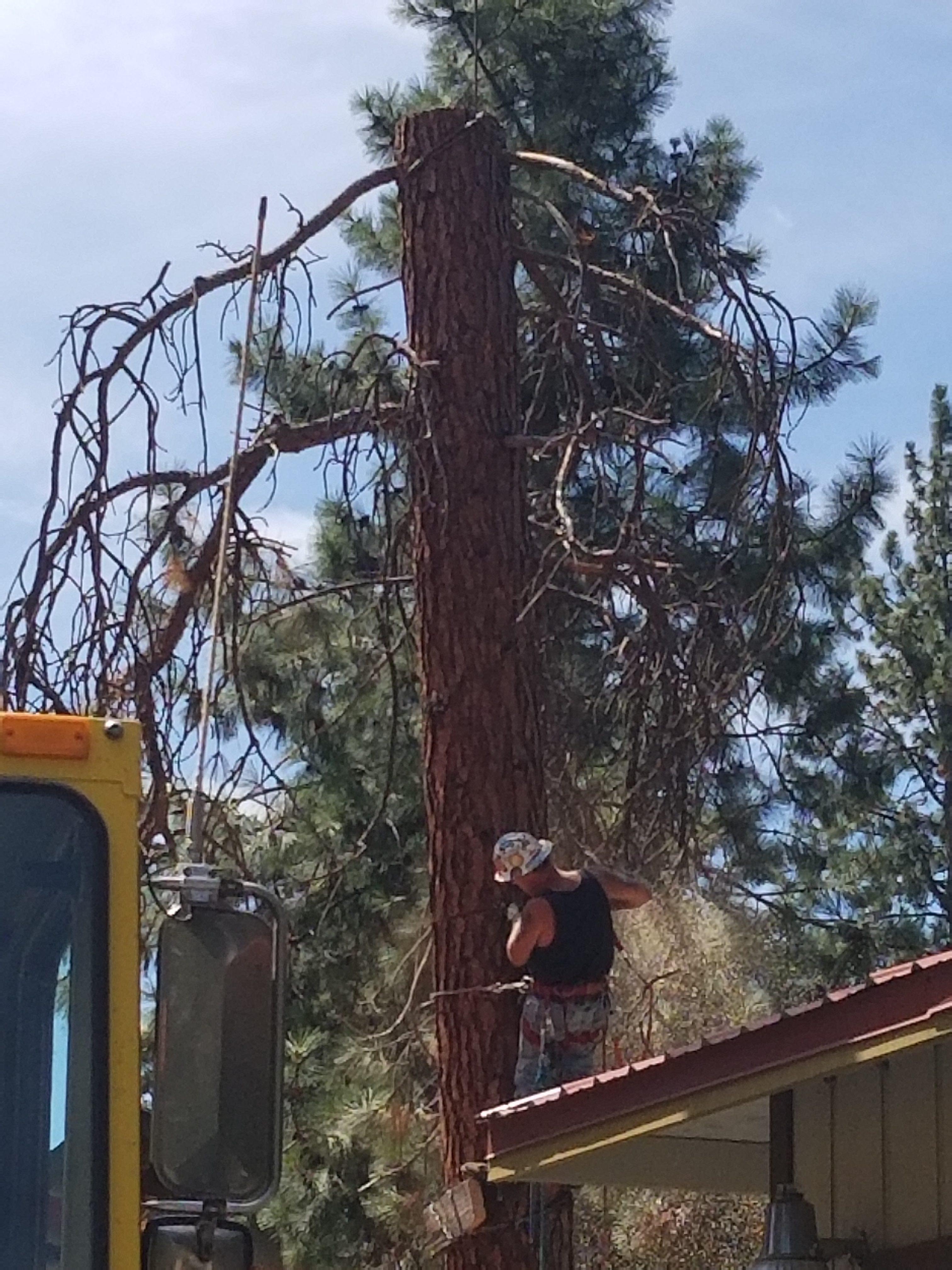 Central Oregon Tree Experts image 2