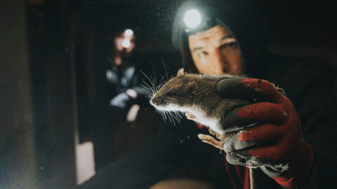Town and Country Pest Solutions | Rochester Pest Control
