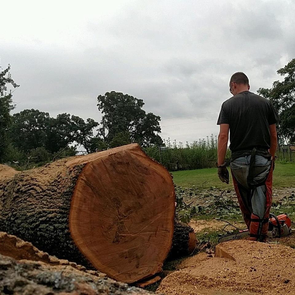 Woodswalker Tree Service image 3