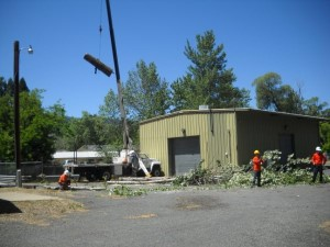 Able Tree Services image 8