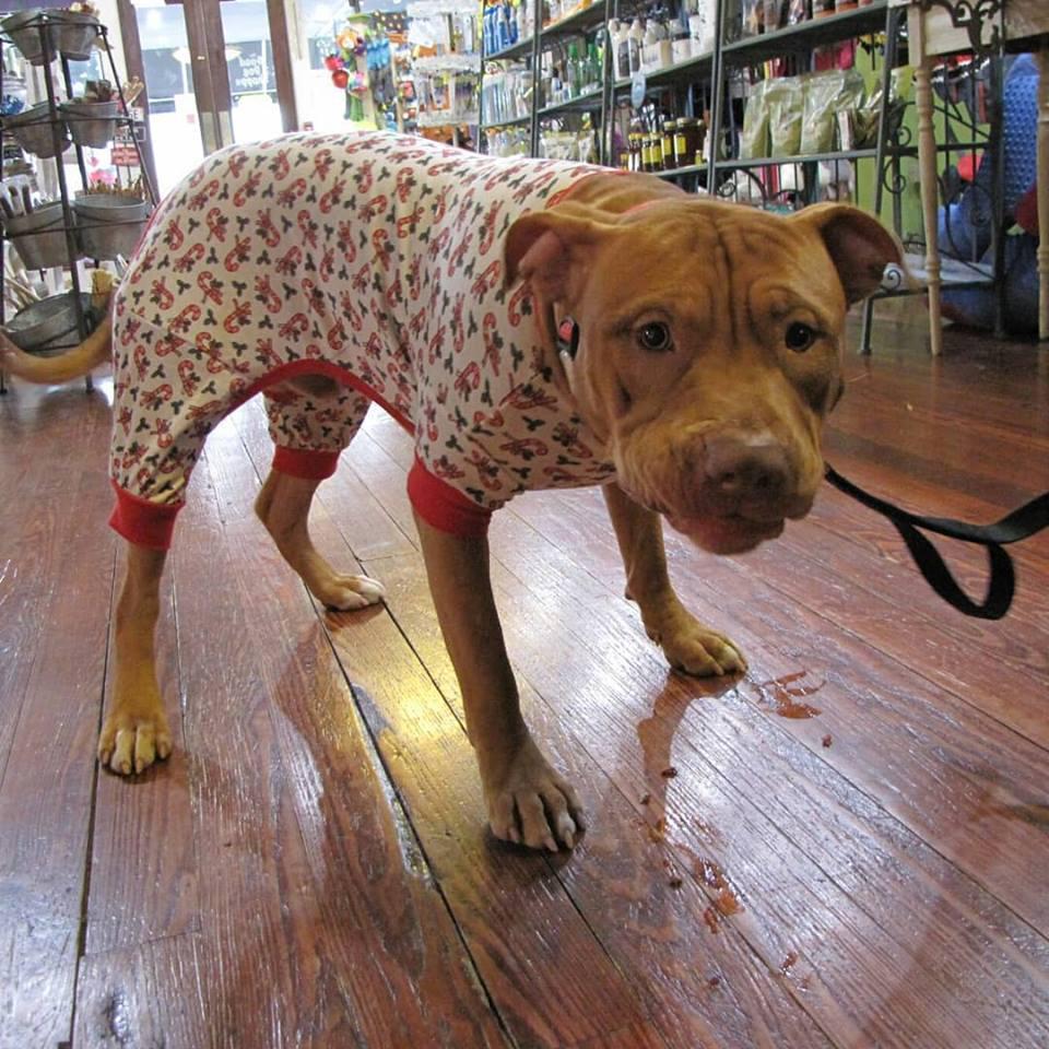 The Good Dog Shoppe image 7