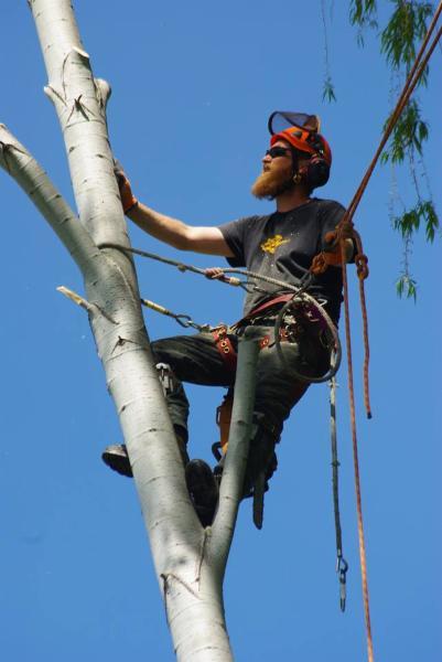 The Fall Guy Tree Service