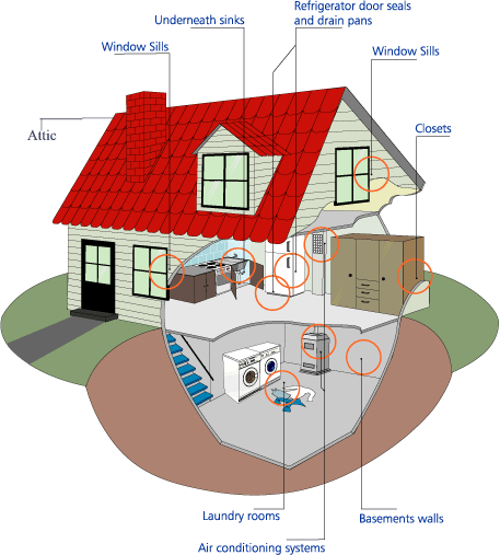 A+ Mold Inspection Specialists LLC image 0