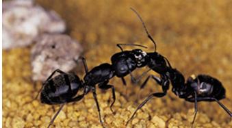 E & G Exterminators image 4