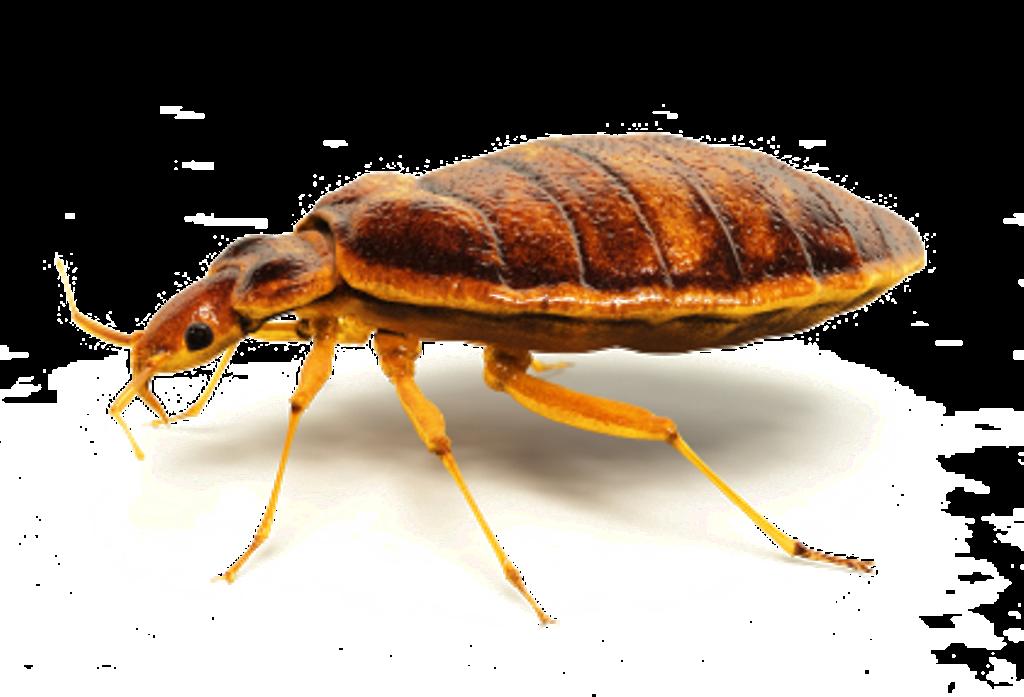 XTERMIN Pest Control image 2